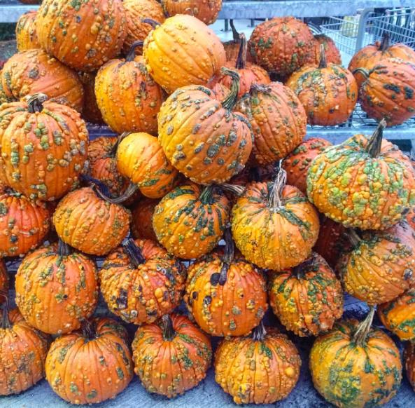 tly_halloween4