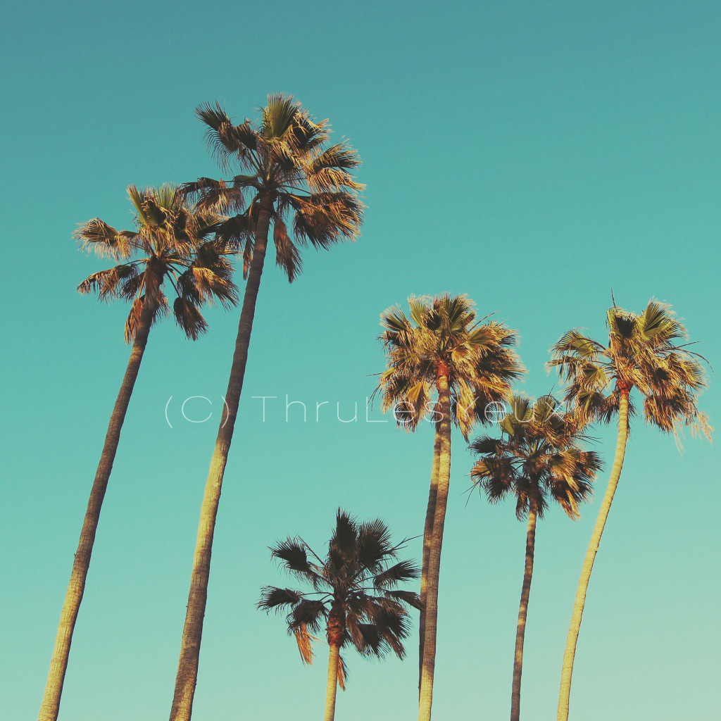 TLY_palmtrees1