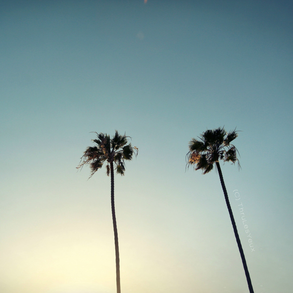 TLY_palmtrees2